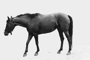 Cómo hacer sus propios iconos de caballos