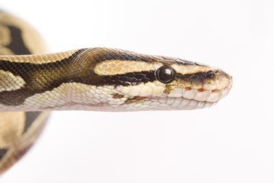 Cómo iniciar el intérprete de Python