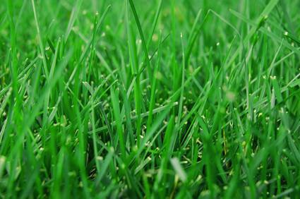 Cómo dar vuelta a la hierba de Brown verde en Photoshop