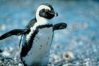 Cómo hacer Pingüinos De Claves de ordenador