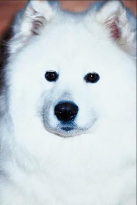 Cómo dar vuelta a la piel blanca de un perro en Photoshop