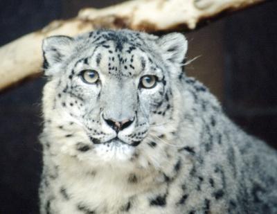 Cómo utilizar tareas recurrentes en Snow Leopard