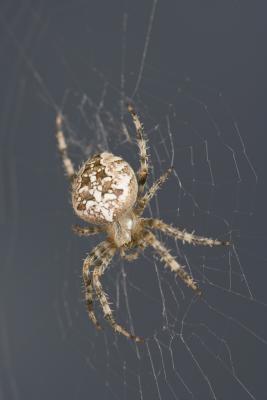 ¿Cuáles son las arañas y qué es lo que buscan en mi página web?